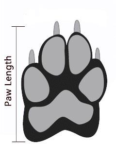 paw-measurement.jpg