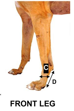 sizingchart-front-leg.jpg