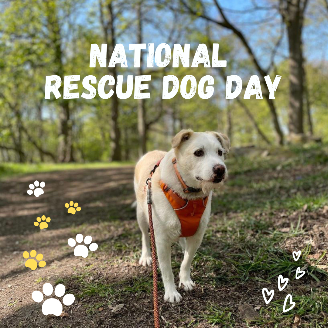 National Rescue Dog Day on K9 Active Instagram