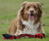 Interactive and Durable Tug N' Pull Rope Toy for your Dog from Grampa's Garden