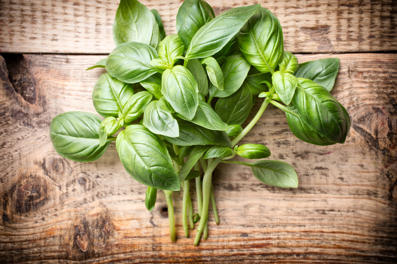 Basil Essential Oil - 100% Natural, Pure and Therapeutic Grade by Grampa's Garden, Made in Maine USA