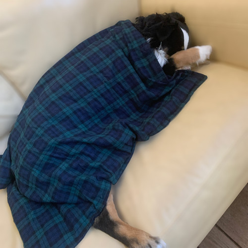 Calming Heating Pack for Dogs