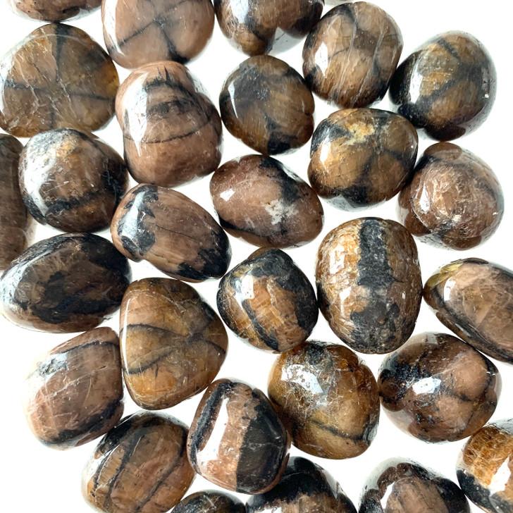 Chiastolite Tumbled Stones