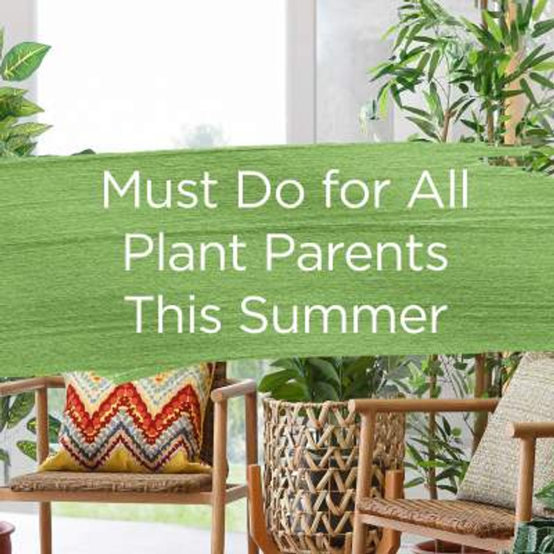 Must-do for all Plant Parents this summer!