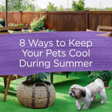 8 Ways To Keep Your Pets Cool This Summer