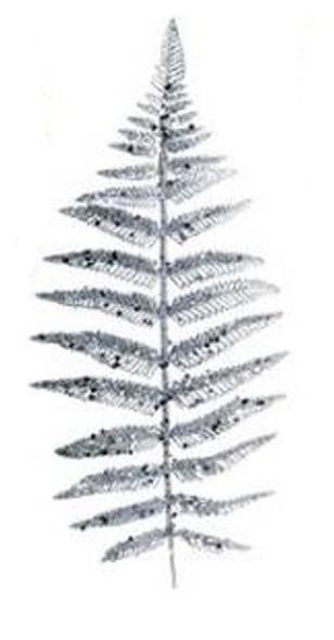 SEM4477S CHRISTMAS FERN SPRAY PICKS- SILVER