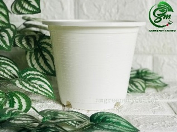 Big Round White Pot
