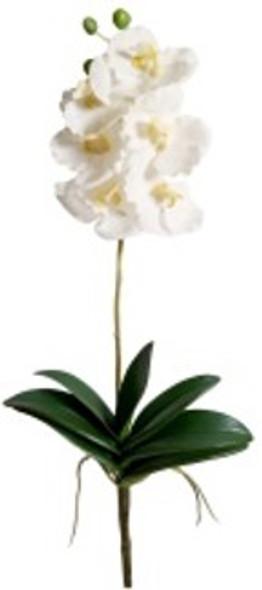 Vanda Orchid Spray OS-0769CR VANDA