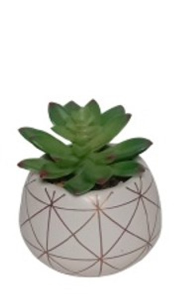 Potted Succulent S-2497-1