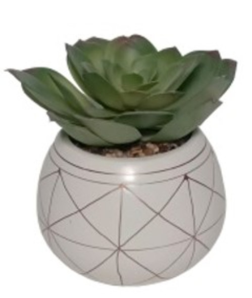 Potted Succulent CS2563-1