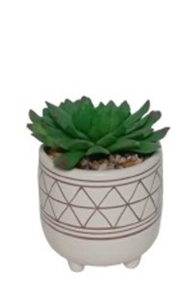 Potted Succulent CS-2458-1