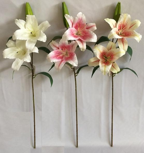Stargazer Flower 34S119035