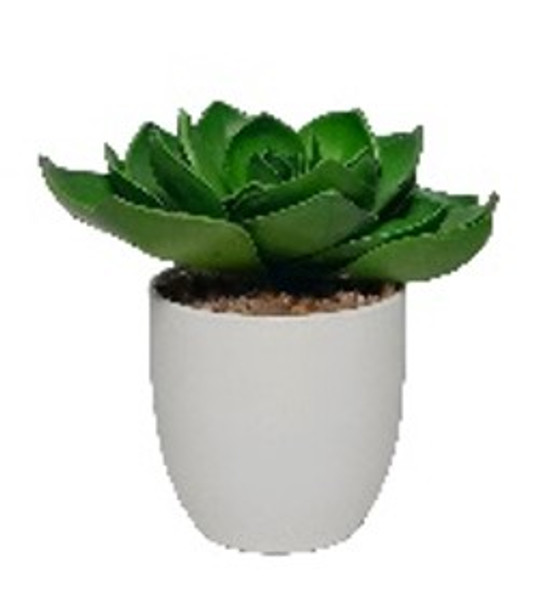Potted Succulent TEMP-5994 POTTED 16.5cm