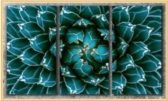 Triptych Wall Art 3IN1 16x32 Agave Cactus