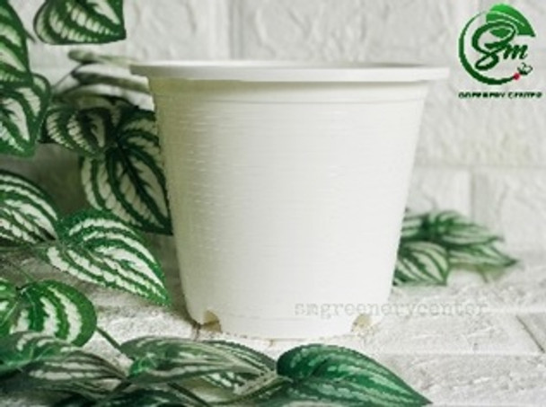 Big Round White Pot