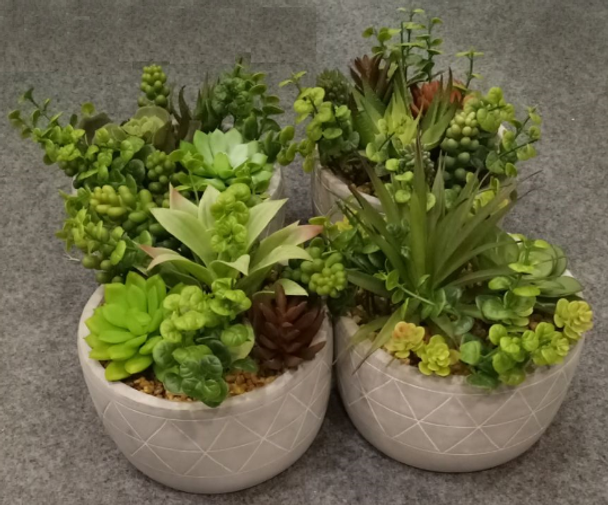 Arrange Succulents