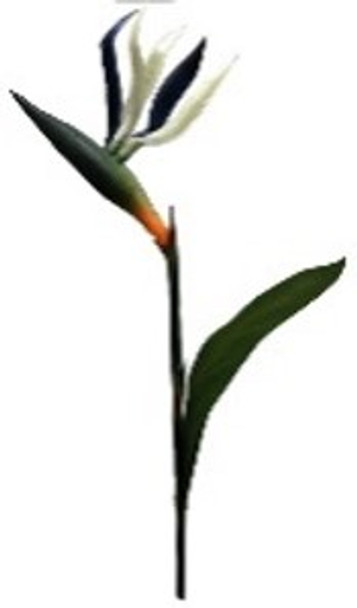 Bird of Paradise Spray OS-0555/001WT