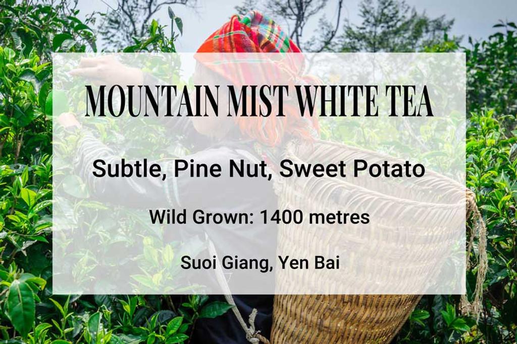 Mountain Mist White Tea, Suoi Giang, Vietnam. Wild tea, wild tea trees, ancient tea trees, shan tuyet