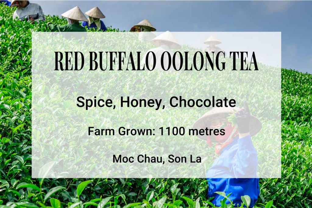 Red Buffalo Oolong Tea Vietnam
