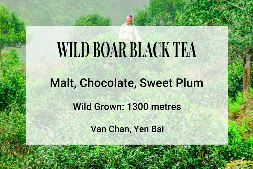 Wild Boar Black Vietnam Tea