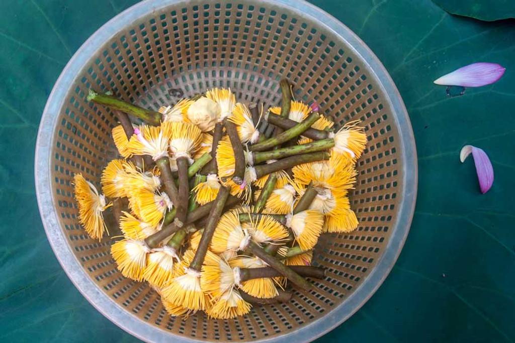 Lotus Flower Stripped Of Petals Vietnam