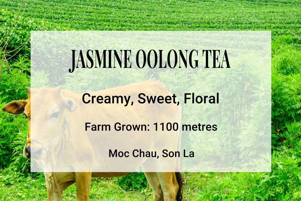 Jasmine Oolong Tea Vietnam