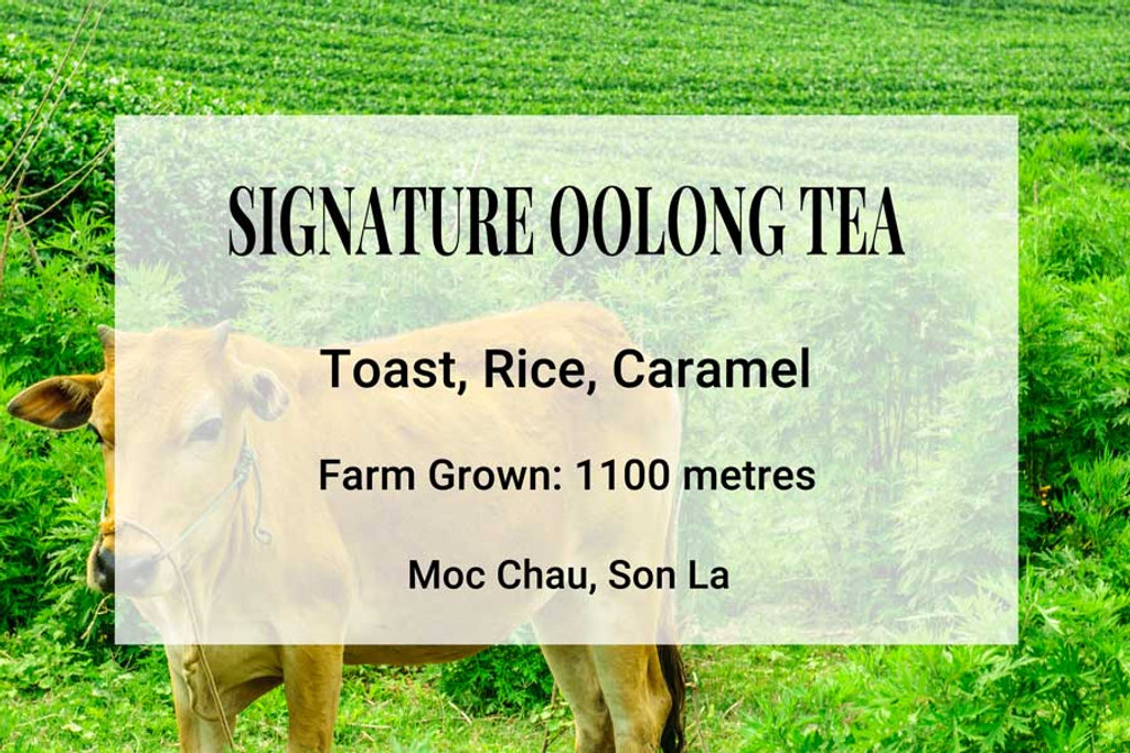 Signature Number 1 Oolong Tea