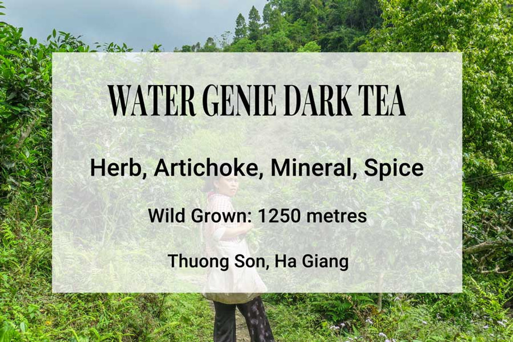 Water Genie Dark Tea