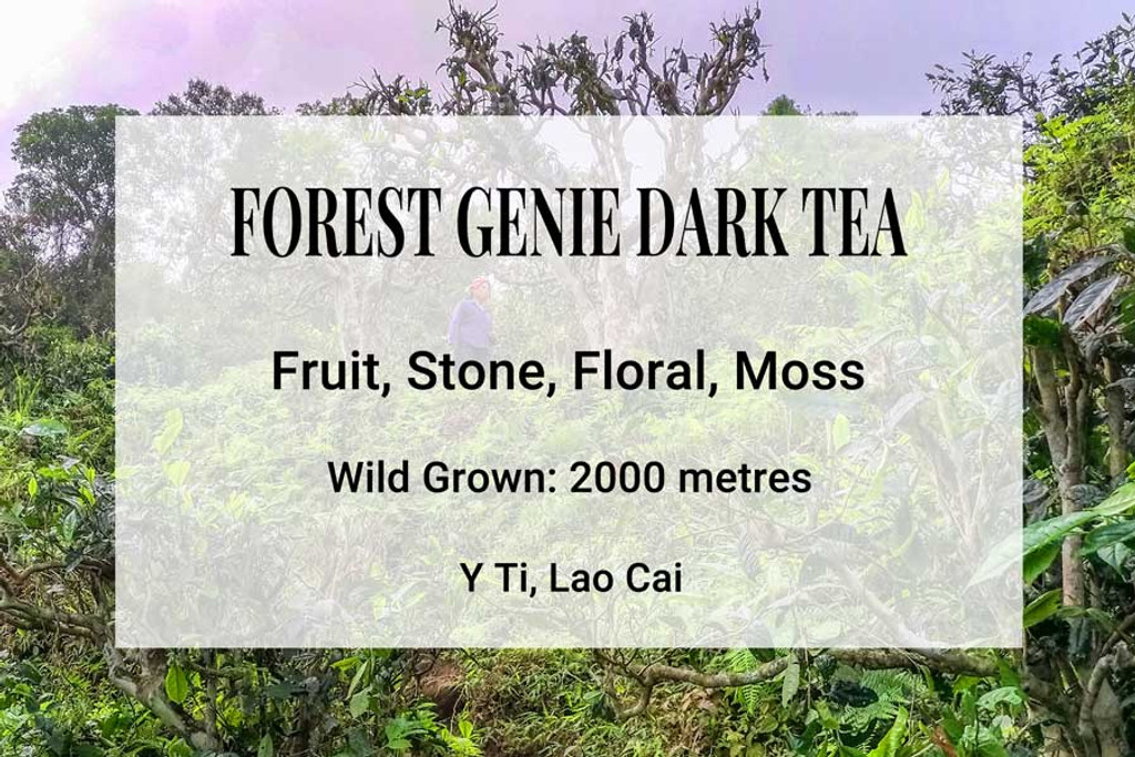 Forest Genie Dark Tea