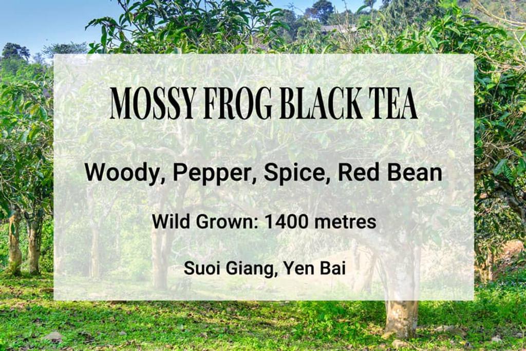 Mossy Frog Black Tea Suoi Giang Vietnam, Wild Tea, Ancient Tea Trees, Shan Tuyet