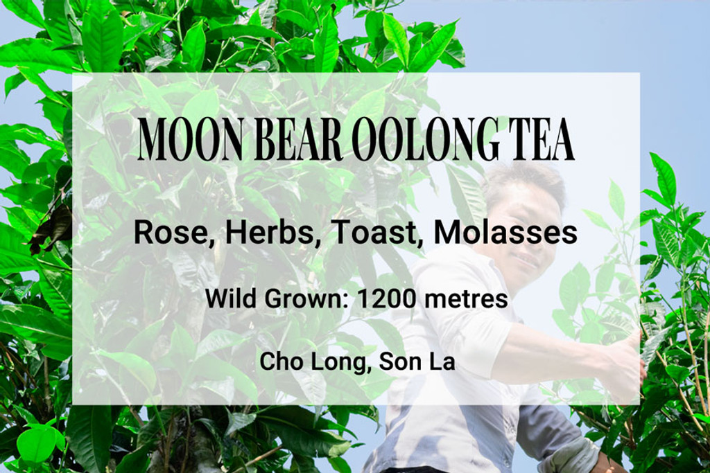 Moon Bear Oolong Tea Son La Vietnam, WIld Tea, Ancient Tea Trees, Shan Tiyet