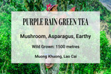 Purple Rain Green Tea, Lao Cai, Vietnam. Wild tea, ancient tea trees, shan tuyet
