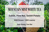 Mountain Mist White Tea, Suoi Giang, Vietnam. Wild tea, wild tea trees, ancient tea trees, shan tuyet