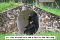 Caz Moon Bear At Tam Dao Bear Sanctuary