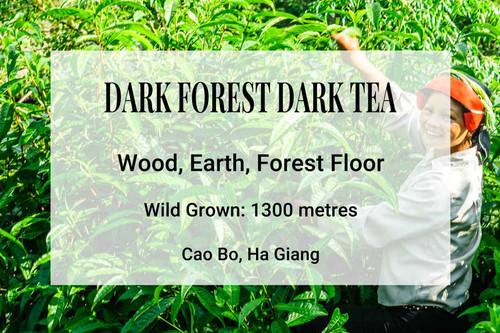 Dark Forest Dark Tea