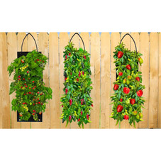 Organic Hanging Grow Kits - Tomatoes, Jalapenos or Peppers - 1, 2, 3 Pack with Tool