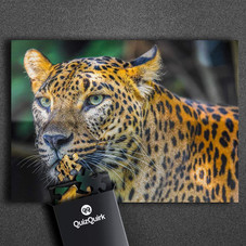 QuizQuirk 1000 Piece Leopard Puzzle and 1000 Piece Flower Blossom Jigsaw Puzzle