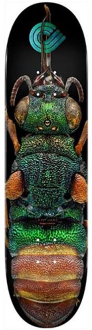 """POWELL 8.50"""" BISS RUBY TAILED WASP PP DECK"""