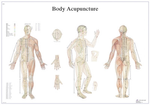 Laminated Anatomical Charts