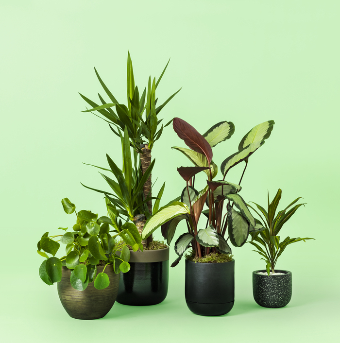 Plants Gifts Delivery