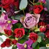 Renaissance Rose