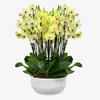 Sunrise Orchids
