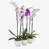 Set of 3 Orchids