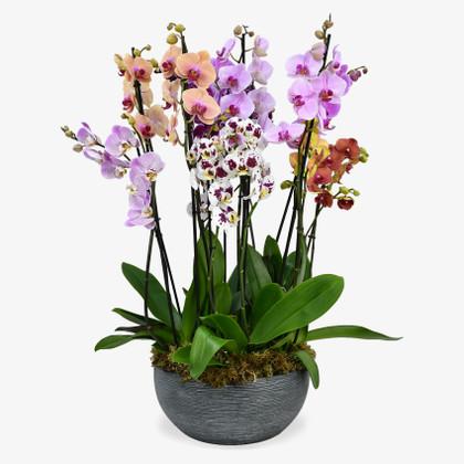 Surprise Me Orchids
