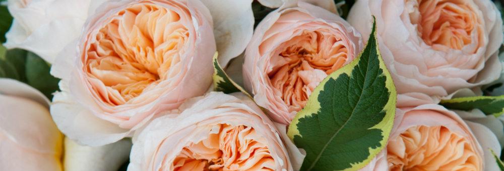 flowers by moyses stevens