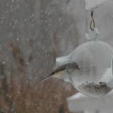 Small Hanging Bird Feeder
