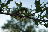 Gypsy Moth Caterpillars Meet the Zombie Apocalypse