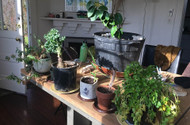 Inspiration for Your Winter Indoor Garden