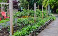 Annie's Small Space Gardening Extreme Urban Farm