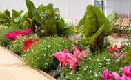 How to Make Your Edible Gardens Beautiful